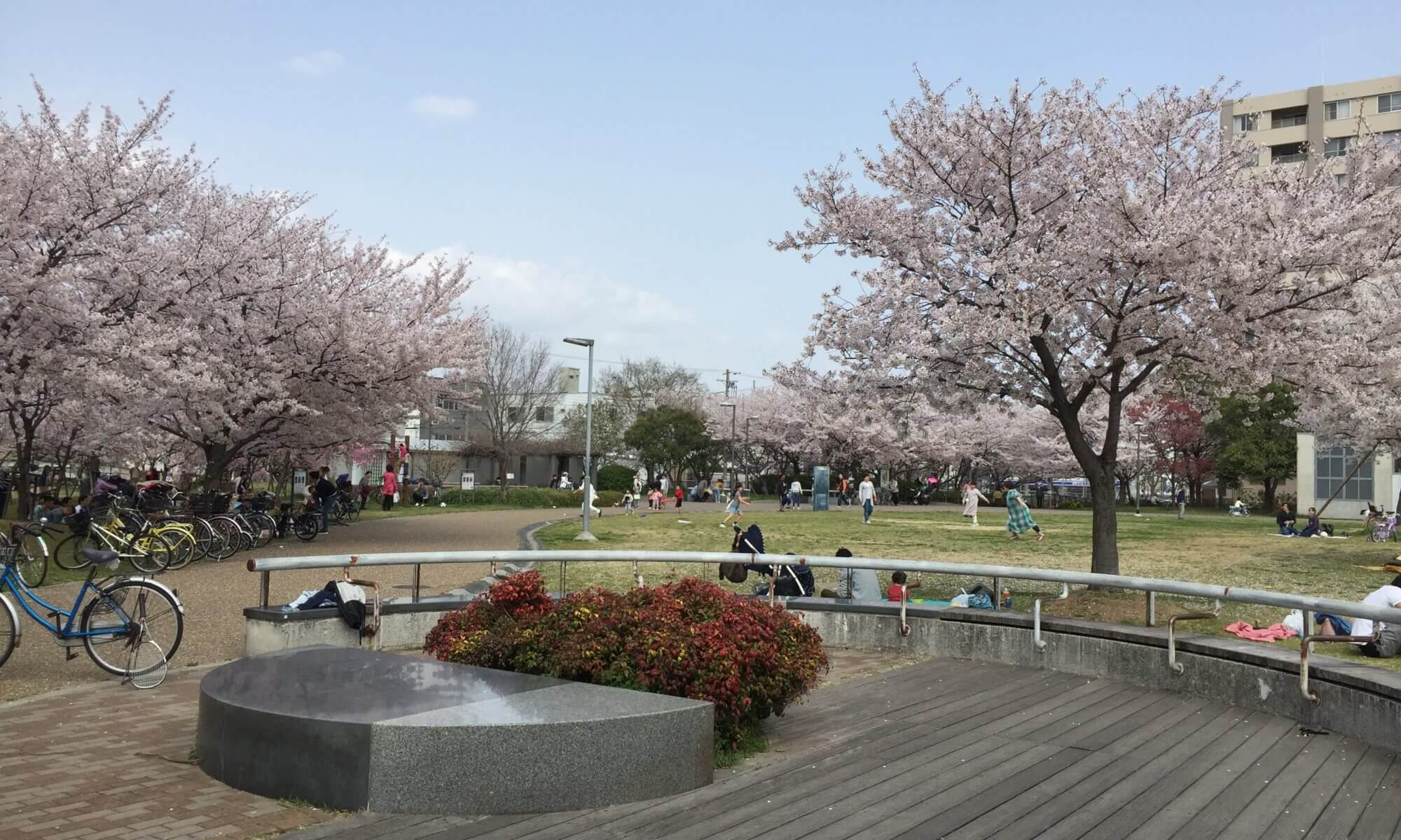 御崎公園 桜