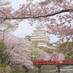 神戸近郊のお花見スポット!子供も楽しい おすすめ5選!